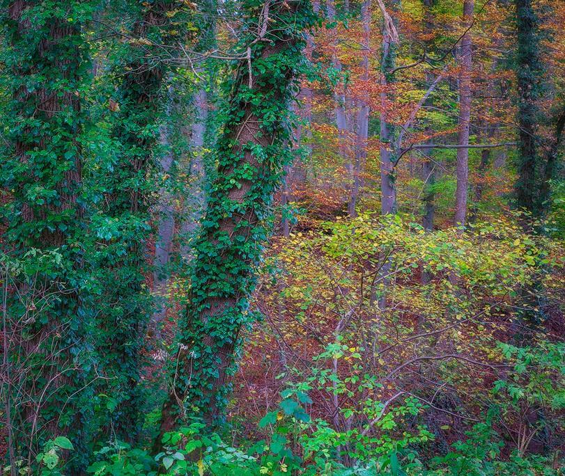 Herbstwald | Gönningen, BW, Deutschland