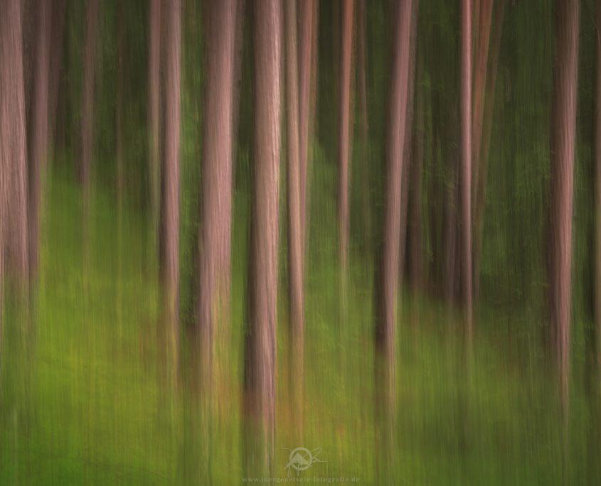 Blurred Trees | St. Andrä, Südtirol, Italien